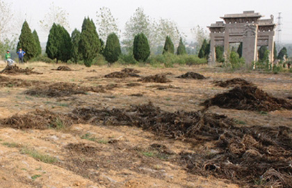 泰安:明代萧大亨墓如今成了荒草滩