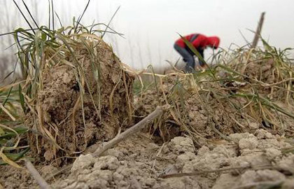 泰安农田旱情急速加剧 30万亩小麦齐喊渴