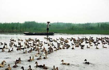 泰安市新增国家级、省级湿地公园各一处