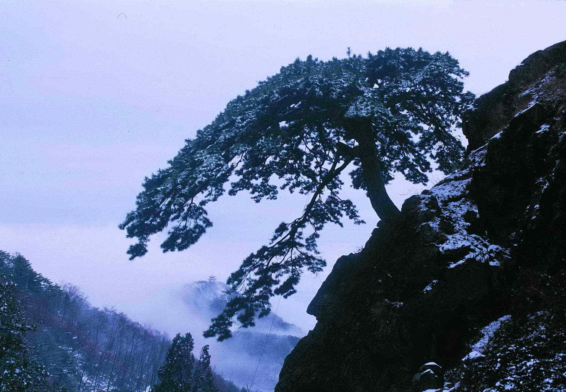 山东泰山风景区管委会日前正式启用泰山古树名木监测管理系统