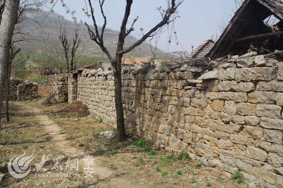 沿着石墙外的小路,一路就上了山,春时节的杏梅花海让人沉醉。