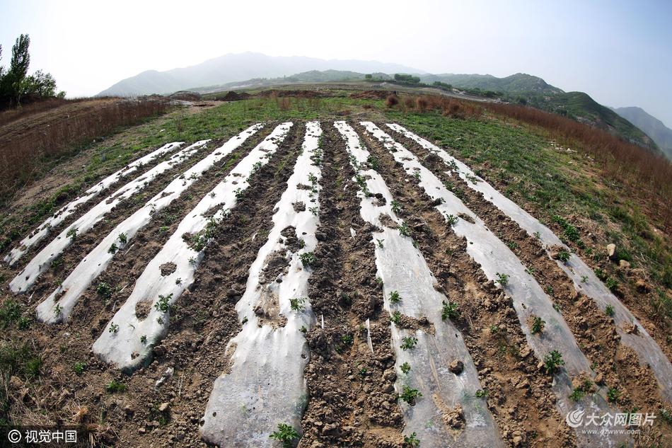2016年04月23日,山东省泰安市,连续几月的干旱少雨使得原本波光粼粼的水面现在成了大片的滩涂。图片作者:芒果/视觉中国