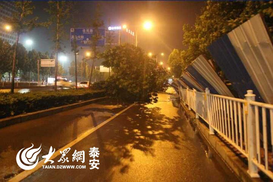6月14日傍晚,闷热的泰安迎来一场倾盆大雨,伴随而来的是8级大风。在泰山大街附近,短时强风甚至把沿路的多棵大树吹折了!(记者 赵伟 摄)
