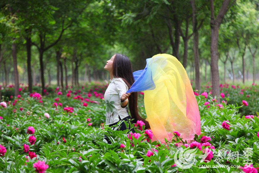 初夏时节,宁阳县东疏镇东疏园林内的芍药花竞相绽放,放眼望去,一片花海如梦如幻。