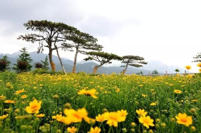 天平湖濕地公園圖片